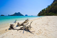 Wood on the tropical beach in Thailand Stock Photo