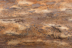 Free Wood Trunk Bark Beetle Texture Stock Photos - 54790593