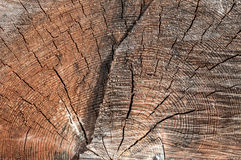 Wood trunk crack texture Royalty Free Stock Images