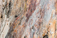 Free Wood Trunk Detail Royalty Free Stock Photo - 87116595