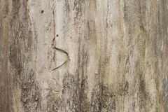 Free Wood Trunk Detail Stock Photography - 88489992