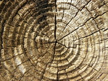 Wood trunk Royalty Free Stock Photo
