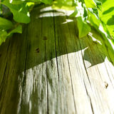 Wood trunk with green leaves Royalty Free Stock Photo