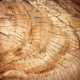Wood, Trunk, Rock, Soil Stock Photo