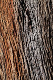 Wood Trunk Royalty Free Stock Images