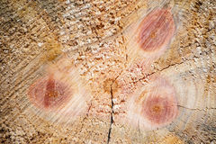 Wood trunk tree cut detail texture abstract background Stock Photos