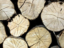 Wood trunk veins Royalty Free Stock Photos