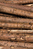 Wood trunks. Wood tree trunks. Background texture Royalty Free Stock Photo