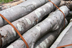Wood trunks. Just cut and tied Royalty Free Stock Images