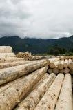 Wood trunks Stock Photos