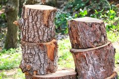 Wood trunks on pile ready to be chopped. A tree logs trunks on grass ready for cutting and winter. Wood industry. Heating season, winter season. Renewable Stock Photo