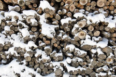 Wood trunks Royalty Free Stock Photos