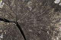 Wood tvärsnittbakgrund Royaltyfria Foton
