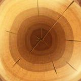 Wood tvärsnittbakgrundstapet Arkivbilder