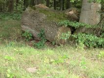 Wood1 image libre de droits