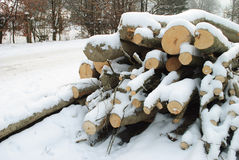 Wood under the snow Royalty Free Stock Photography