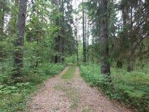 Wood väg Arkivbild