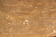 Wood vägg Arkivbilder
