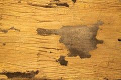 Wood väggtextur och bakgrund Royaltyfri Foto
