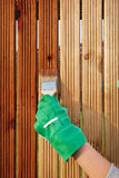 Wood varnishing. Applying protective varnish on a wooden fence Stock Image