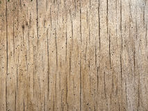 Wood veneer attacked by woodworm Royalty Free Stock Photos
