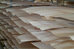 Wood veneer for plywood production Stock Images