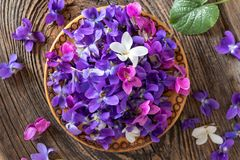 Wood violet flowers in a bowl, top view.  royalty free stock image