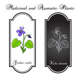 Wood violet Stock Photos
