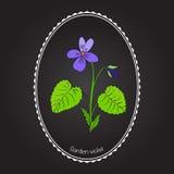 Wood violet Stock Images