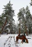 wood vita kvinnor för hästväg Royaltyfri Fotografi
