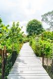 Walk way in the garden Stock Photo