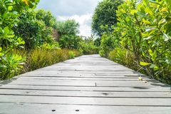 Walk way in the garden Royalty Free Stock Photography