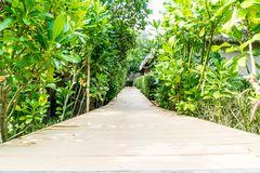Walk way in the garden Royalty Free Stock Image