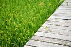 Wood walk  way on green field Royalty Free Stock Image
