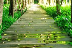 Wood Walk Way Royalty Free Stock Photos