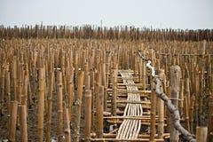 Wood walk. Wooden walk on slump land Royalty Free Stock Photo