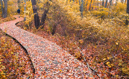 Wood Walking Pathway in fall autumn in Connecticut USA. Orange and red fall foliage wood walk path Connecticut USA royalty free stock photos