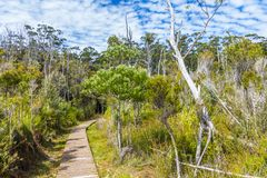 Hiking trail through Tasmanian wilderness at Hastings caves. Wood walking platform through Tasmanian wilderness at Hastings caves royalty free stock images
