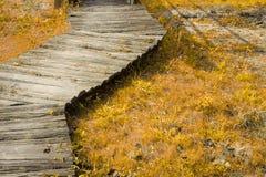 Wood walkway Royalty Free Stock Photo