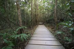 Wood walkway in forest. Thailand Stock Images