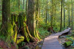 Hiking Trail Through Forest in Lynn Canyon Park Vancouver BC Canada. Wood walkway path hiking trail through forest in Lynn Canyon Park in the municipal of royalty free stock image