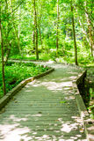 Wood Walkway Through Spring Forest Royalty Free Stock Photography