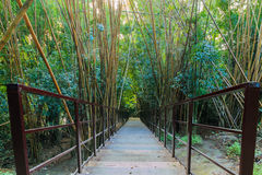 Wood walkway on a wild park Stock Photos