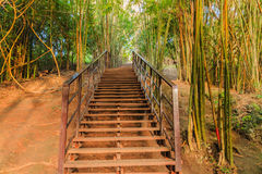 Wood walkway on a wild park Royalty Free Stock Image