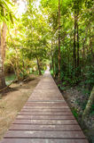 Wood walkway on a wild park to the Waterfall Huay Mae Kamin,. Thailand Royalty Free Stock Photos
