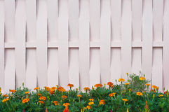The wood wall. Flower grows in front the wood wall Royalty Free Stock Photo