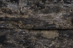 Wood wall grunge fungus Stock Images