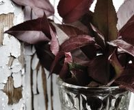 Wood wall red bouquet   flowers still life. Wall old red bouquet flowers still life textured leaf glass close-up Stock Images
