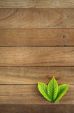Wood wall Texture and leaves for Background for your work Royalty Free Stock Image