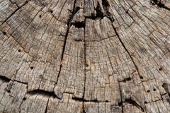 Wood wallpaper Royalty Free Stock Images